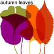 We Love Nature™ Autumn Leaves