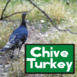 Chive Turkey JNL