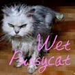 Wet Pussycat™