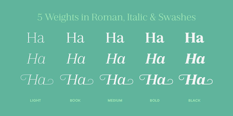 Plexes Book Font