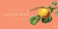Saveur Sans Font Download