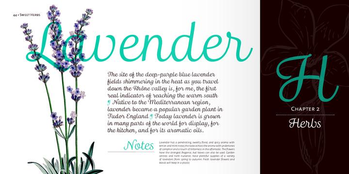 Madre Script | Webfont & Desktop font | MyFonts