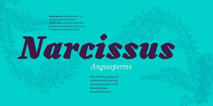 Canilari | Desktop font | MyFonts