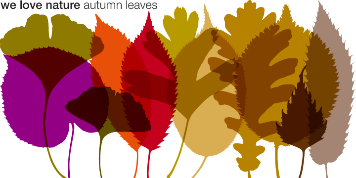 We Love Nature Autumn Leaves