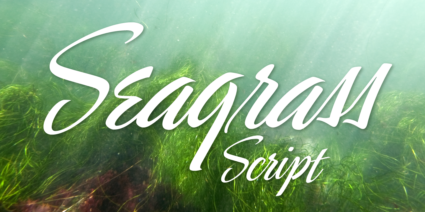 Seagrass BF
