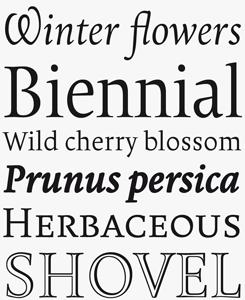 Borges font sample